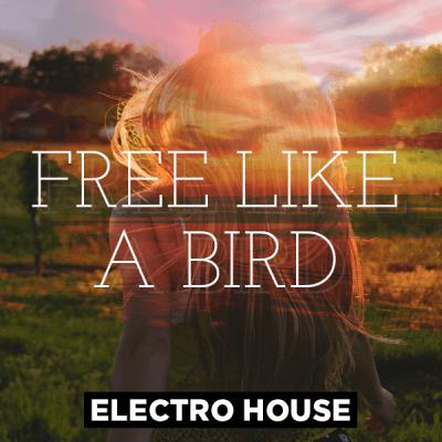 Electro House - Free like a bird